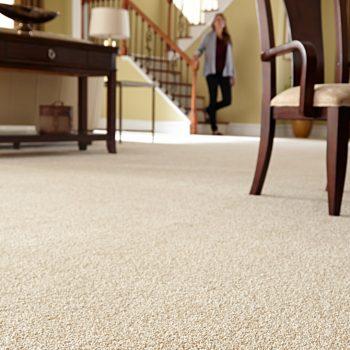 carpet floor 2